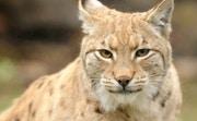 Animal Puzzle Wildlife & Logic